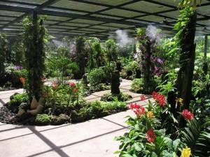 singapore-botanic-garden